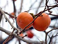 Fruit1l_2